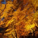 ライトアップもお馴染み香嵐渓!紅葉の見ごろに観光してきたぞ